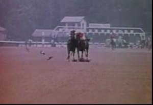 Birds on the racetrack
