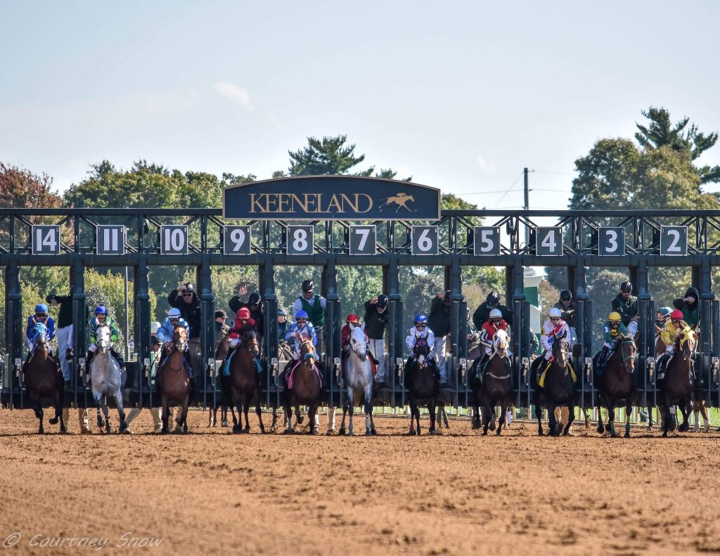"alt=""Starting gate and Kenneland"""