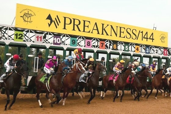 """alt=""""The starting gate at the Preakness"""""""